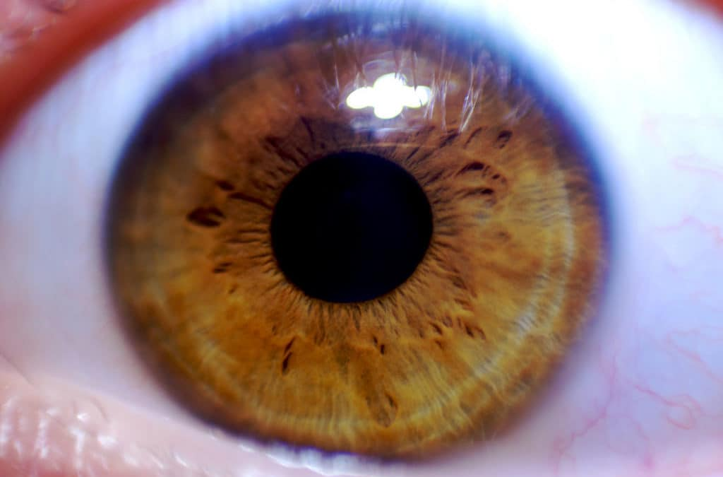 How Omega-3's Help With Vision