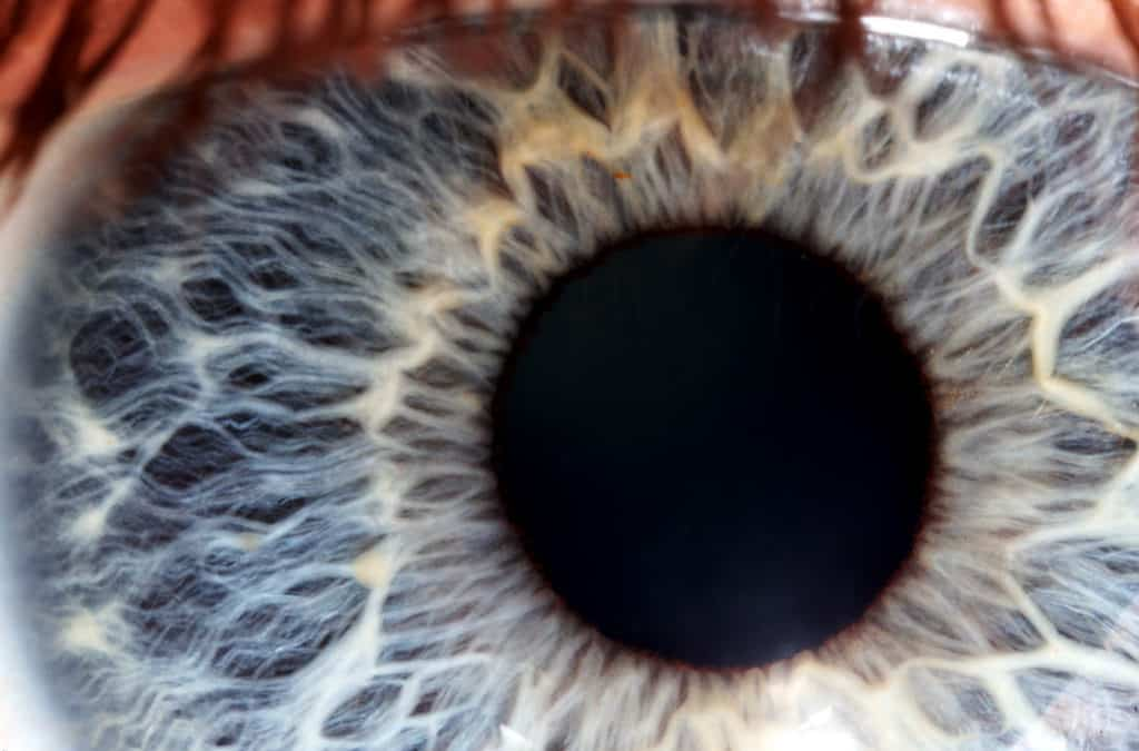 How Your Eyes Work