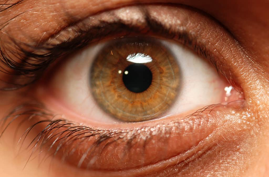 Exploring the Cells Inside Your Eye