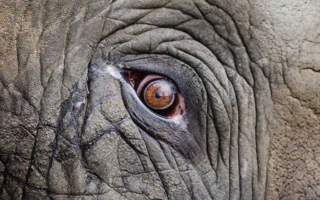 How Human Eyesight Stacks Up in the Animal Kingdom