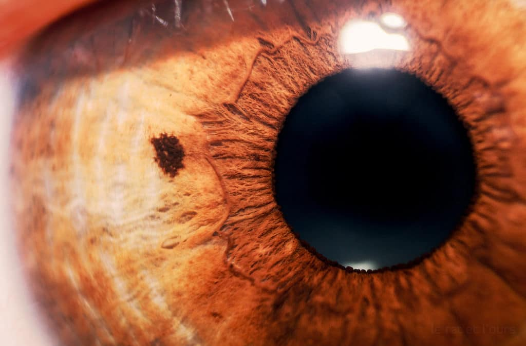 The Purpose of Eye Nerves